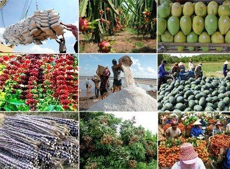 Quy định mới về hoạt động tư vấn và dịch vụ khuyến nông