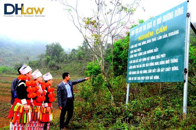 Phạt 25 triệu đồng nếu phá hủy công trình bảo vệ rừng