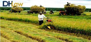 Các địa bàn được hỗ trợ phí bảo hiểm nông nghiệp
