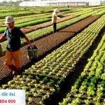 Thủ tục làm sổ đỏ cho đất nông nghiệp