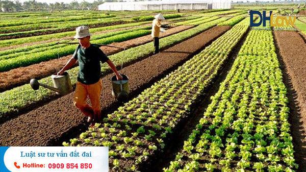 Thủ tục làm sổ đỏ đất nông nghiệp